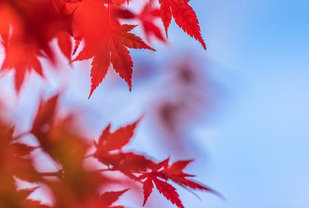 feuille arbre: feuilles de l'automne, très peu se concentrer
