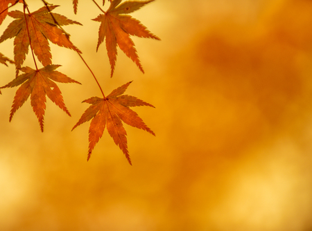 shallow  focus: autumn leaves, very shallow focus Stock Photo
