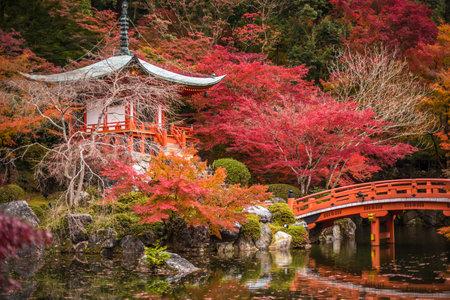 日本: 醍醐寺のカエデの木、紅葉の季節、京都、日本