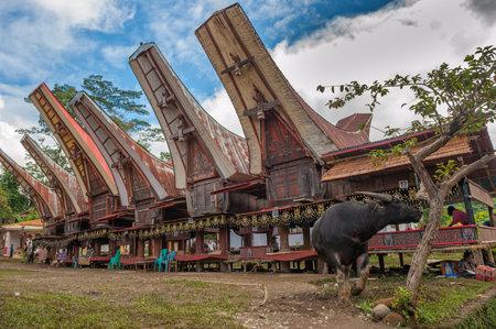 sulawesi: Tongkonan houses, traditional Torajan buildings, Tana Toraja, Sulawesi, Indonesia