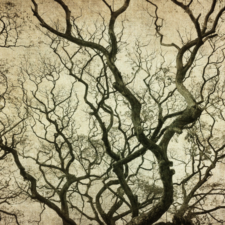 tree silhouettes: grunge frame with tree silhouettes