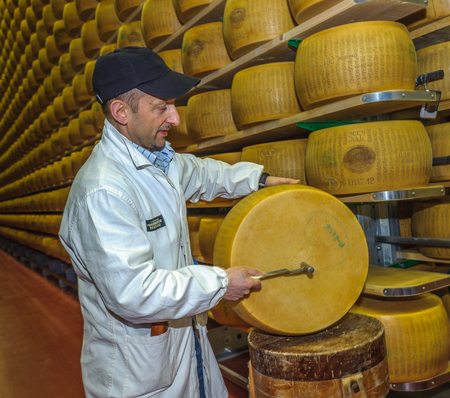 grader: PARMA, ITALY - March, 10, 2014: Parmesan cheese quality test by battitore, master grader