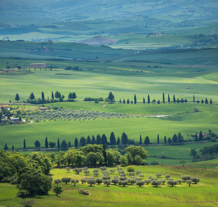 typical: image of typical tuscan landscape Stock Photo