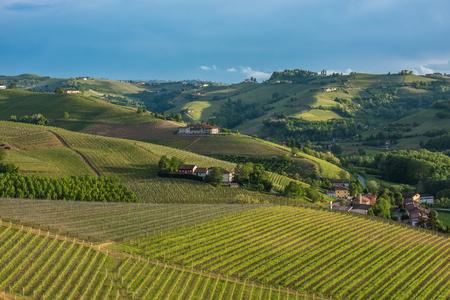 wineries: Vineyards of Langhe, Piedmont