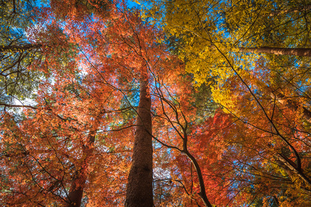 feuillage: multi color trees in the autunm forest Banque d'images