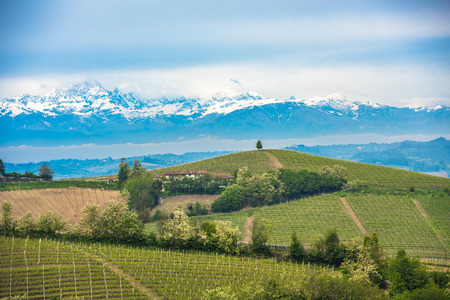 italy landscape: Vineyards of Langhe, Piedmont