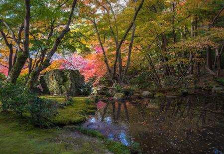 zen attitude: arbres multicolores dans la forêt de autunm Banque d'images