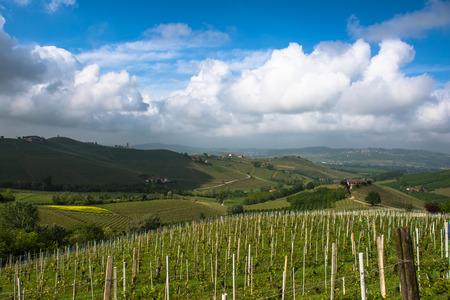 piedmont: Vineyards of Langhe, Piedmont