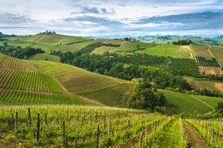 Langhe 포도원, Piedmont 스톡 콘텐츠