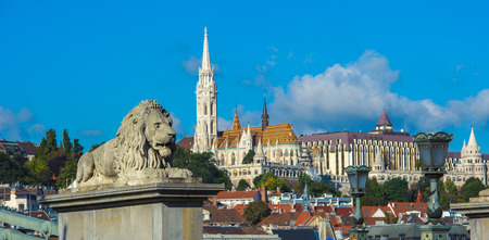 building a chain: Lion sculptures of the Chain Bridge with the view of Budapest, Hungary