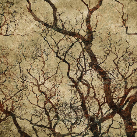 tree silhouettes: grunge background with tree silhouettes