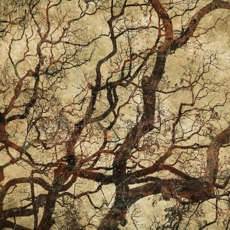 grunge tree: grunge background with tree silhouettes