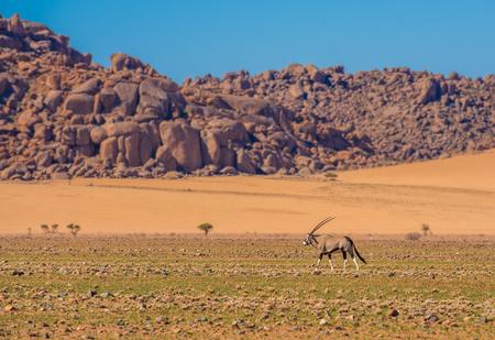 Oryxantilope in Nationalpark Namib-Naukluft, Namibia Standard-Bild - 76747848