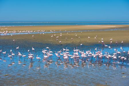 Flock of flamingos at Walvis Bay, Namibia