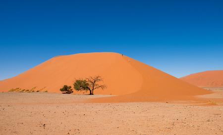 destination scenics: Dune 45, Sossusvlei, Namib-Naukluft National Park, Namibia Stock Photo