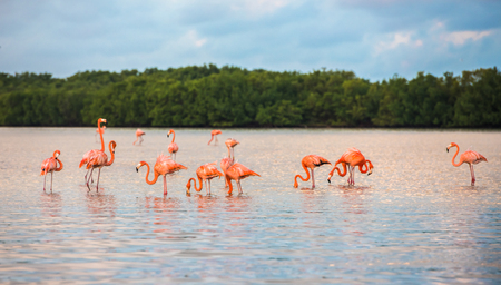 Flamingoes at Rio Lagartos Biosphere Reserve, Yucatan, Mexico