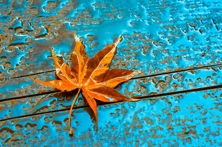 autumn leaf on a wet wooden surface Stock Photo