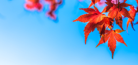 autumn leaves, very shallow focus 版權商用圖片