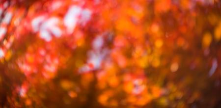 momiji: defocused red leaves, perfect autumn background