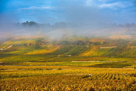 Vineyards in the foggy autumn morning, Burgundy, France Stock Photo