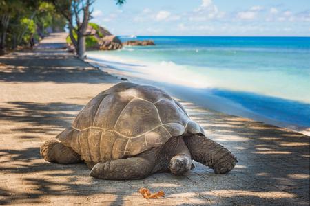 Seychelles giant tortoise  Stock fotó