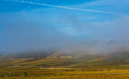 Vineyards in the foggy autumn morning, Burgundy, France Stock Photo
