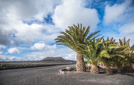 Volcanic landscape of Lanzarote, Canary islands, Spain