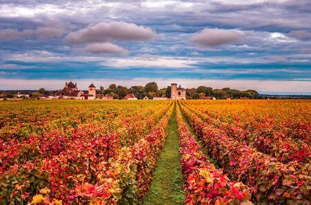 Viñedos en la temporada de otoño, Borgoña, Francia