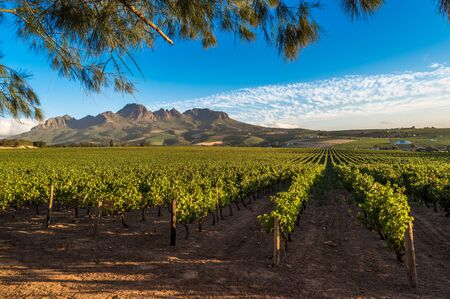 Beautiful landscape of Cape Winelands, wine growing region in South Africa Фото со стока