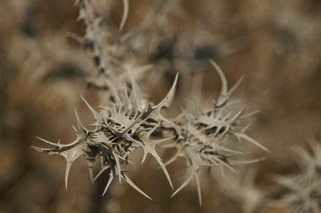 decline: thorny, spiny dry grass - decline, decay Stock Photo