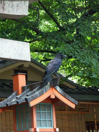 fate: Tokyo garden,silence, relax, calm - raven predicts a fate Stock Photo