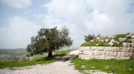 ancient israel: Sebastia ancient israel excavation on palestinian territory