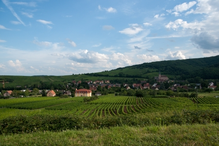 Hiking in Alsace with vinewyard views in France vacation Stock Photo - 21383851