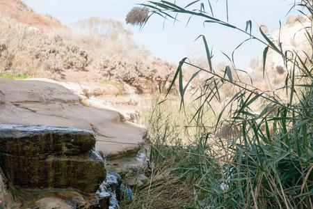 negev: Oazis with water in the negev desert of israel Stock Photo