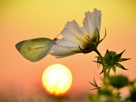 A butterfly rested on a flower under the sunset. Banco de Imagens