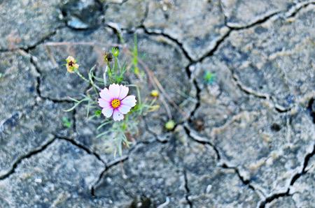 Flores en la tierra seca.