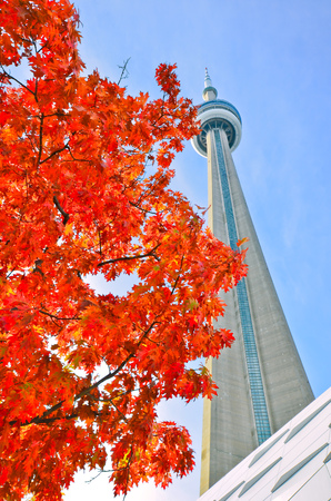 toronto: View of red maple tree and CN Tower in autumn