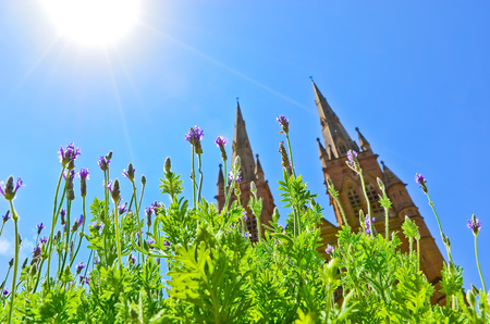 花とハイドパーク シドニーの聖マリア大聖堂の眺め。