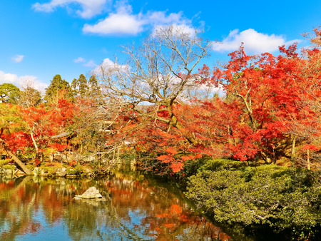 field maple: View of the Japanese garden in autumn in Kyoto, Japan.