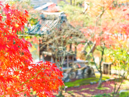 View of the Japanese garden in autumn in Kyoto, Japan.