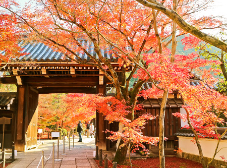Colorful autumn foliage in the Zenrin-ji Temple in Kyoto