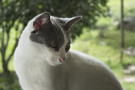 stray: Grey cat