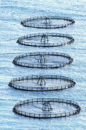 fish rearing: fish farm Stock Photo