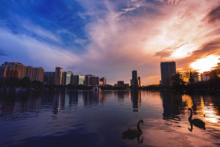 Swans in the water and  a dramatic sunset in Lake Eola Orlando Florida.