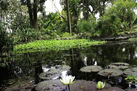 botanical pond Editorial