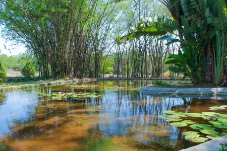 Pond designed as a landscaping element in Yucatan,Mexico.