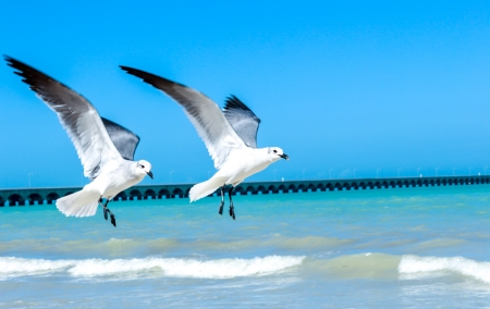 imagge for flying seagulls over a Yucatan peninsula beach photo