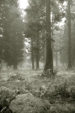 vizcaya: Fog in the forest, Gorbea, Bizkaia (Spain)