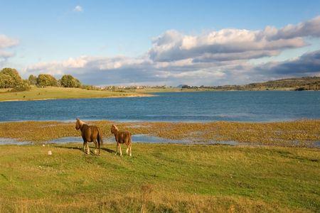 ebro: Marsh of the Ebro near Reinosa, Cantabria (Spain)
