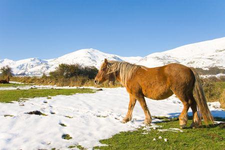 cantabria: Horse in Ato Campoo near of Reinosa, Cantabria (Spain)